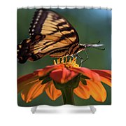 Tiger Swallowtail - 3 Shower Curtain