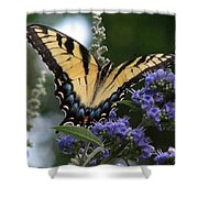 Tiger Swallowtail 3 Shower Curtain