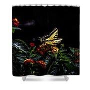 Tiger Swallowtail Shower Curtain