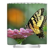 Tiger Swallowtail Butterfly Shower Curtain by Bill Cannon