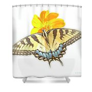 Tiger Swallowtail Butterfly, Cosmos Flower Shower Curtain