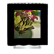 Tiger Swallowtail Butterfly On Begonia Bloom         June            Indiana Shower Curtain