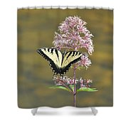 Tiger Swallowtail Butterfly On Common Milkweed 1 Shower Curtain