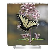 Tiger Swallowtail Butterfly On Common Milkweed 2 Shower Curtain
