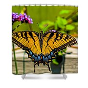 Tiger Swallowtail Butterfly By Fence Shower Curtain