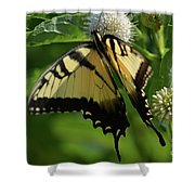 Tiger Swallowtail On Button Bush Shower Curtain