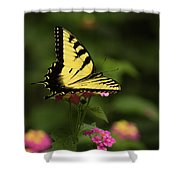 Tiger Swallowtail Shower Curtain