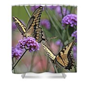 Tiger Swallowtails Shower Curtain