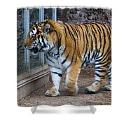 Tiger Territory 4 Shower Curtain