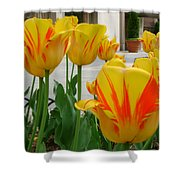 Tiger Tulips Shower Curtain
