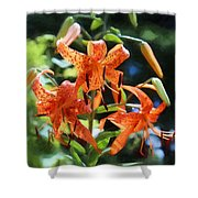 Tigers In The Sun Shower Curtain