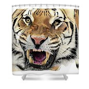 Tigers Pace Shower Curtain