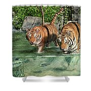 Tiger's Water Park Shower Curtain