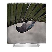 Tightrope Walker Bird Shower Curtain