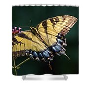 Tigress And Verbena Shower Curtain