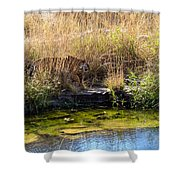Tigress By The Stream Shower Curtain