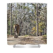 Tigress Walking Along A Track In Sal Forest Pench Tiger Reserve India Shower Curtain