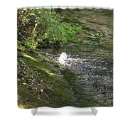 Timava's Spring I Shower Curtain