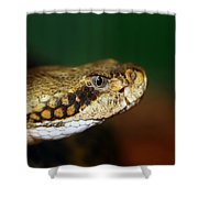 Timber Rattler Head On Shower Curtain