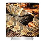 Timber Rattlesnake Horizontal Shower Curtain