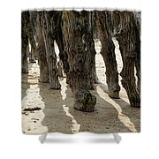 Timber Textures Lll Shower Curtain