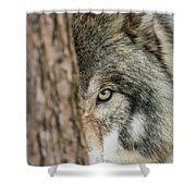 Timber Wolf Picture - Tw285 Shower Curtain