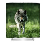 Timber Wolf Picture - Tw69 Shower Curtain