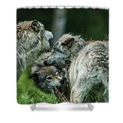 Timber Wolf Picture - Tw70 Shower Curtain