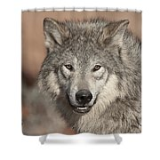 Timber Wolf Portrait Shower Curtain