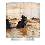 Time For A Mud Bath Shower Curtain