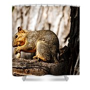 Time For A Peanut Shower Curtain
