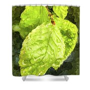 Time Travel Summer Leaves Shower Curtain