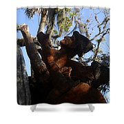 Timucuan Warriors Shower Curtain