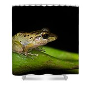Tink Frog Diasporus Diastema Shower Curtain