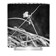 Tiny Ballerina Shower Curtain
