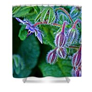 Tiny Blue Flower On A Bush At Pilgrim Place In Claremont-california  Shower Curtain