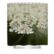 Tiny Cluster Of Queen Anne's Lace Shower Curtain
