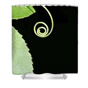 Tiny Curl Shower Curtain