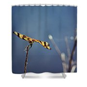 Tiny Dragon Shower Curtain