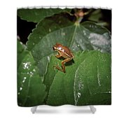 Tiny Escapee Shower Curtain