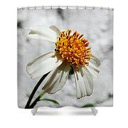 Tiny Flower  Shower Curtain