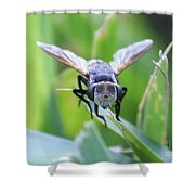 Tiny Fly Shower Curtain