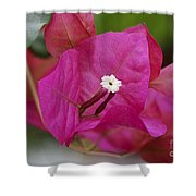 Tiny Little White Flower Shower Curtain