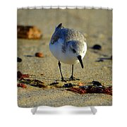 Tiny Matters Shower Curtain