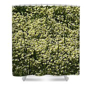 Tiny Meadow Flowers Shower Curtain
