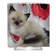 Tiny Micro Version Of Red White And Ragdoll Kitty Kitten Baby Cat Silktapestrykittenstm Shower Curtain