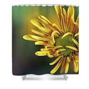Tiny Miracles Shower Curtain
