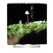 Tiny Mushroom 1 Shower Curtain