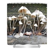 Tiny Mushrooms On The Step Shower Curtain by Carrie Viscome Skinner