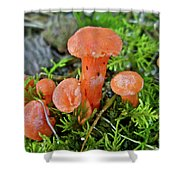 Tiny Orange Mushrooms In Moss Shower Curtain